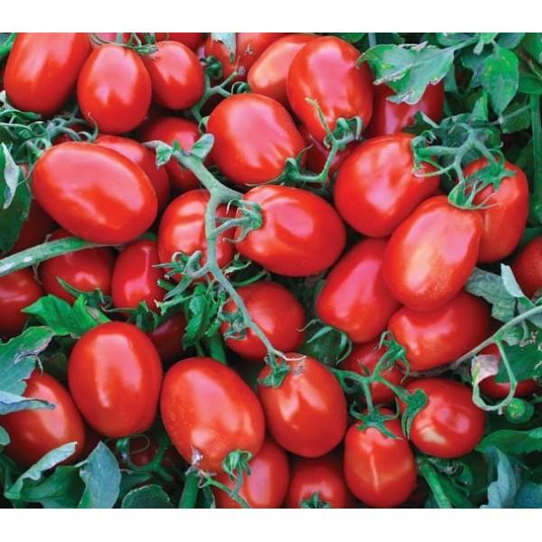 salçalık domates
