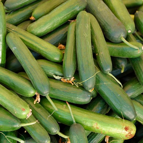 sofralık salatalık
